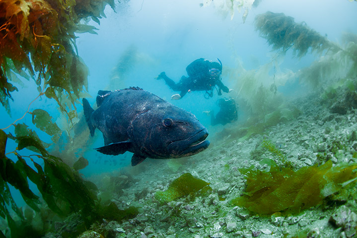 PADI COURSE - AWARE - FISH IDENTIFICATION